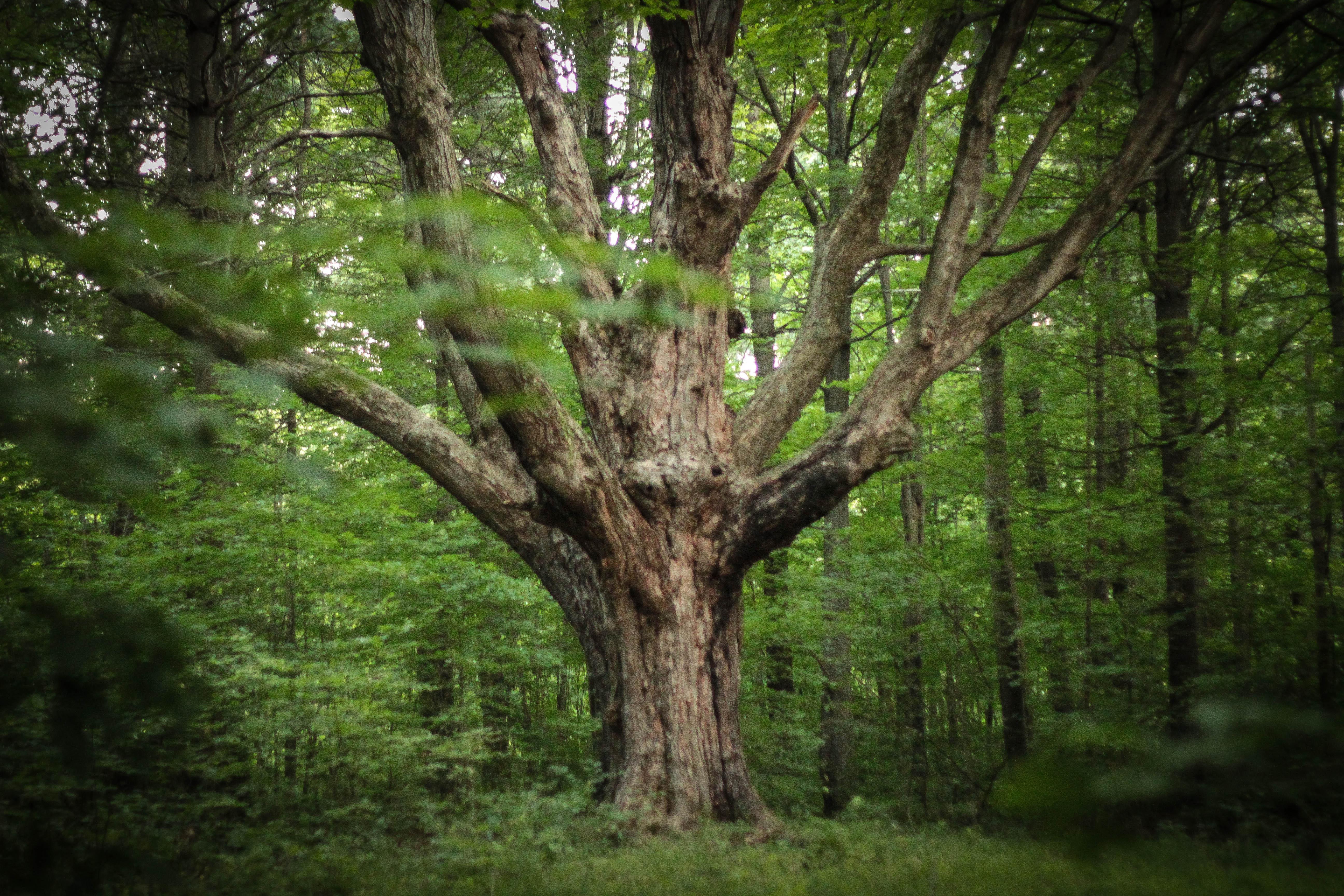big tree gutschein